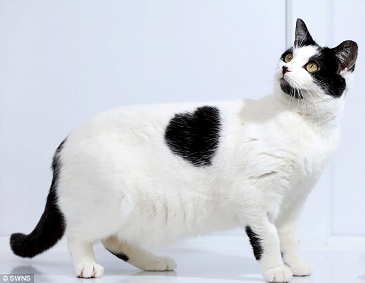 21 Cats With The Most Unique Fur Patterns Ever Top13