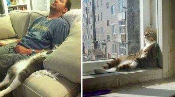 18 Hilariously Lazy Cats That Have Reached A Complete State of Relaxation