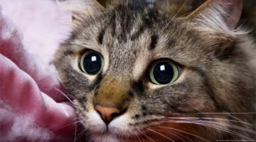 10 Unexpected Ways Your Cat Is Actually Saying 'I Love You'