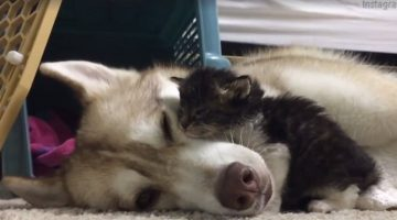 This Dog Has Raised a Kitten As One of Her Own and Now They're Best Friends