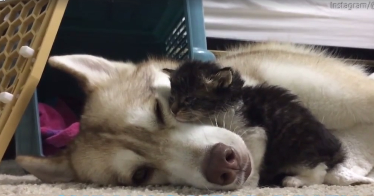 This Dog Has Raised a Kitten As One of Her Own and Now ...