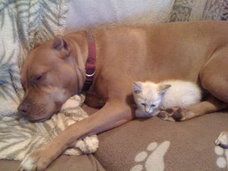 dog loves cat