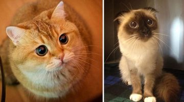 13 of the Best Puss in Boots Impressions Ever