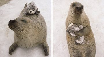This Seal Got A 'Mini Me' And Can't Stop Hugging It