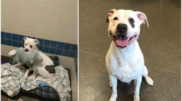 Shelter Pup Gets a New Chance At Happiness, and He Can Take His Elephant With Him
