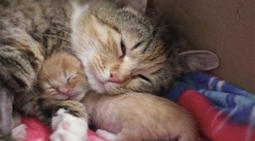 Pregnant Stray Cat Saved From The Streets Can't Stop Cuddling Her Tiniest Kitten