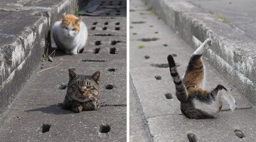 Stray Cats Discover Drain Pipe Holes And Now They Are Having The Best Time Ever