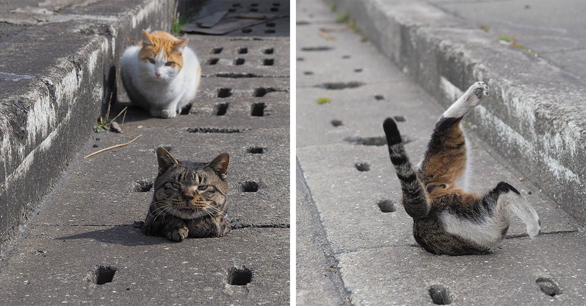 Stray Cats Discover Drain Pipe Holes And Now They Are