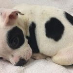 """This Puppy Was Dumped Because He's """"Different"""", But His New Humans Accepted Him For Who He Is"""