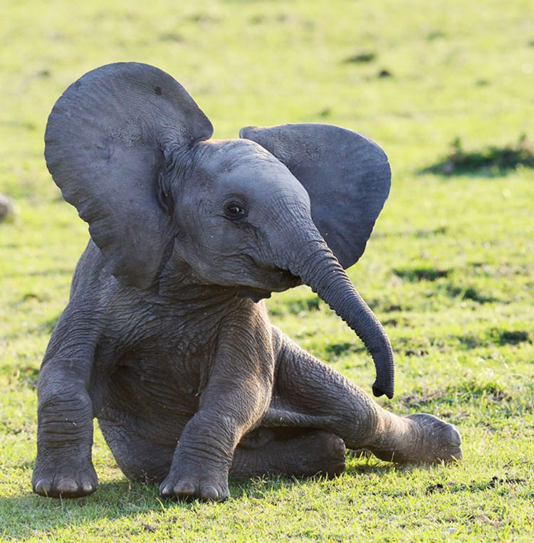20 of the cutest baby elephants that will melt your heart - Cute elephant pictures ...