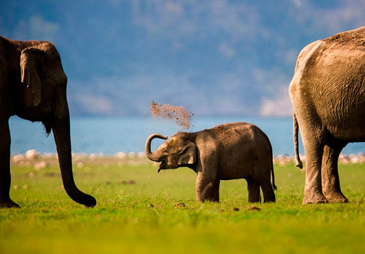adorable elephant pictures