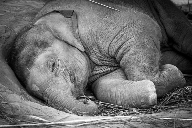 20 of the cutest baby elephants that will melt your heart top13