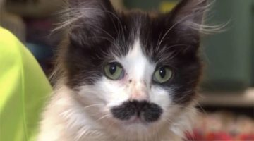 This Kitten Was Found Abandoned In a Donation Bin. When Rescuers Saw Her Face, They Were Amazed!