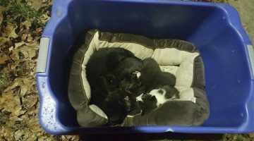 Cat 'Mom' Was Found Protecting Kittens In The Cold. But The Cat Isn't Who They Thought
