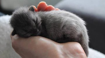 Gray Kitten Surprises Rescuer When He Starts To Change Color