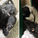 Dog, Cat And Rat Become Best Friends And Refuse To Be Apart