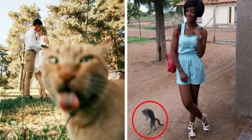 12 Funny Asshole Cats That Photobombed Perfect Shots