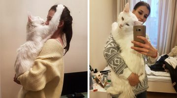 This Cat Grew Up Hugging His Humans And Won't Stop Even Though He's All Grown Up