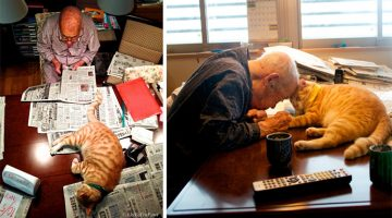 Photographer Got A Kitten For His Sick Grandpa And Captured Their Friendship