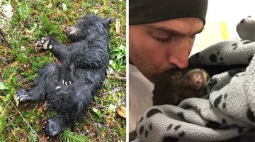 This Man Risked Jail-Time To Rescue A Dying Baby Bear He Found While Hiking