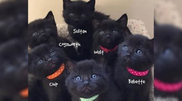 Abandoned Black Cat Delights Rescuers When She Gives Birth To 6 Identical Kittens