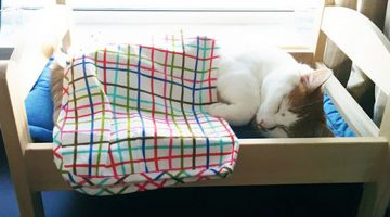 IKEA Donated Doll Beds For Cats Living At An Animal Shelter, And It's Just Too Cute