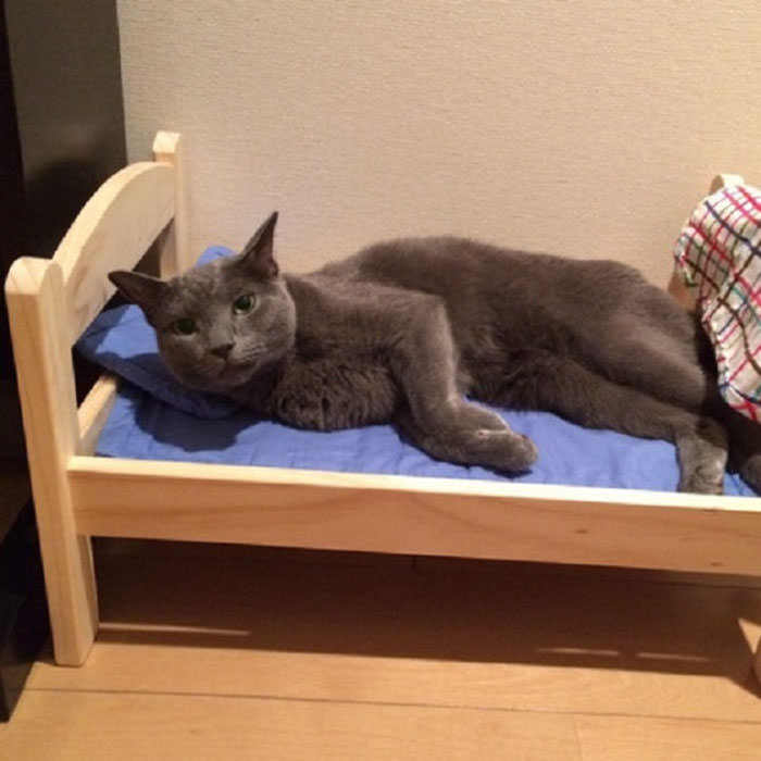 ikea donates doll beds shelter cats