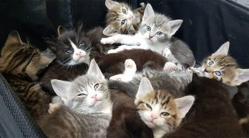Kittens Dumped On The Side Of The Road In a Suitcase Were Rescued And Have A Loving Home Now