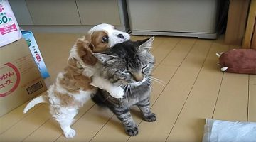 This Kitty Is So Patient! Watch How Well He Handles His New Puppy Friend