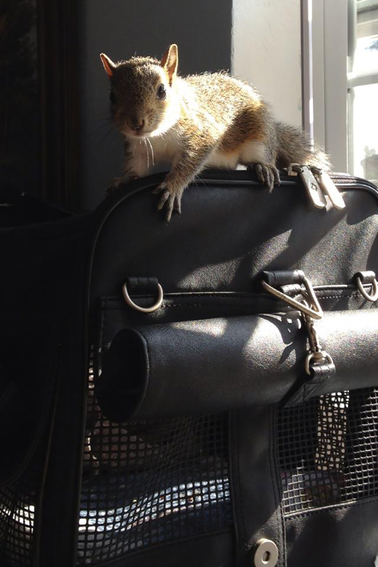 man-finds-tiny-squirrel-10