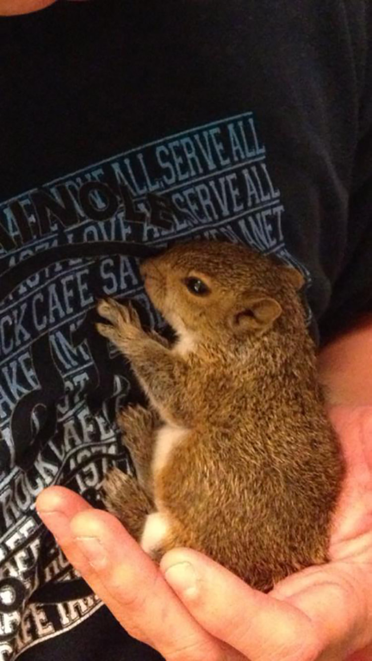 man-finds-tiny-squirrel-6
