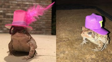 Man Makes Hats For Visiting Toad and Finds a New Calling