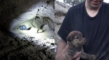 Man Crawls 18 Feet Into The Earth To Pull Off The Most Epic Puppy Rescue
