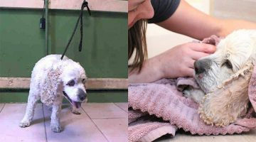 20-Year-Old Dog Was Abandoned At The Shelter For A Sad Reason. But Rescuers Gave Him A Second Chance At Life