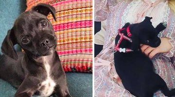 No One Wanted This Puppy Because It Was Different , So This Celebrity Decided To Adopt It