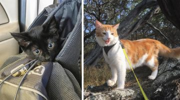 Outdoors-Loving Cat Finds A Lost Kitten, And Teaches Her EVERYTHING