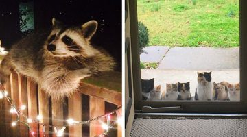 13 Animals That Came To Say 'Hello', And Everyone Went 'Aww'