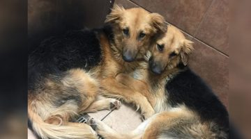 Dogs Dumped At Kill Shelter Were So Scared That They Wouldn't Let Go Of Each Other. Then Rescuers Stepped In