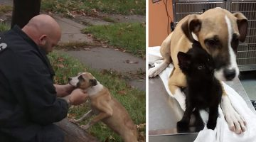 Chained Puppy And Kitten Left Abandoned In The Rain, Until A Hero Stepped In