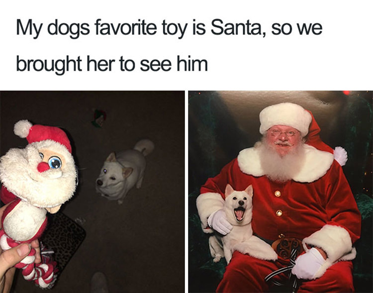 wholesome funny dog memes