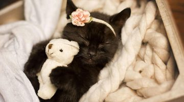 Photographer Does Kitten Photo Shoot For Her Daughter – Cutest Thing Ever!