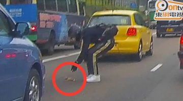 Motorcyclist Stops Highway Traffic To Save A Tiny Kitten