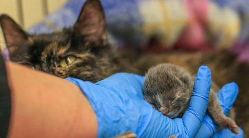 Mother Cat Knew Just What To Do To Save Her Tiny Kitten From Freezing Cold Temperatures