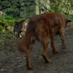 Blind Dog Had Trouble Getting Around, But Then He Met a Cat Who Helped Lead The Way (Video)