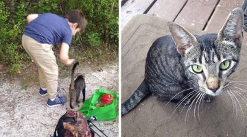 Dad And Son Did Something Nice For A Stray Cat, Next Day She Came Back With A Surprise