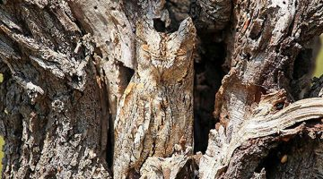 13 Incredible Examples of Animal Camouflage That Will Make You Look Twice