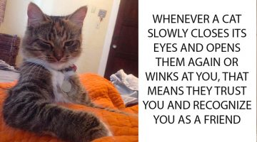12 Awesome Cat Facts That You Probably Didn't Know