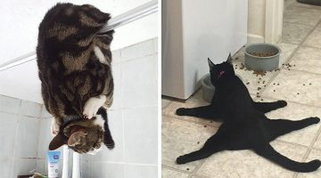 23 Funny Pictures Of Cats Acting Weird