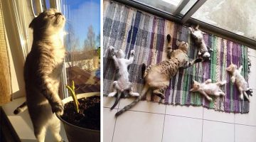 18 Pictures That Prove Cats Love Sun More Than Anything