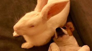 Rescue Bunny Can't Get Enough of His New Dogs